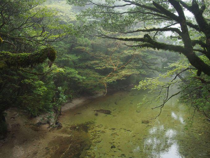 登山道は世界自然遺産エリア!