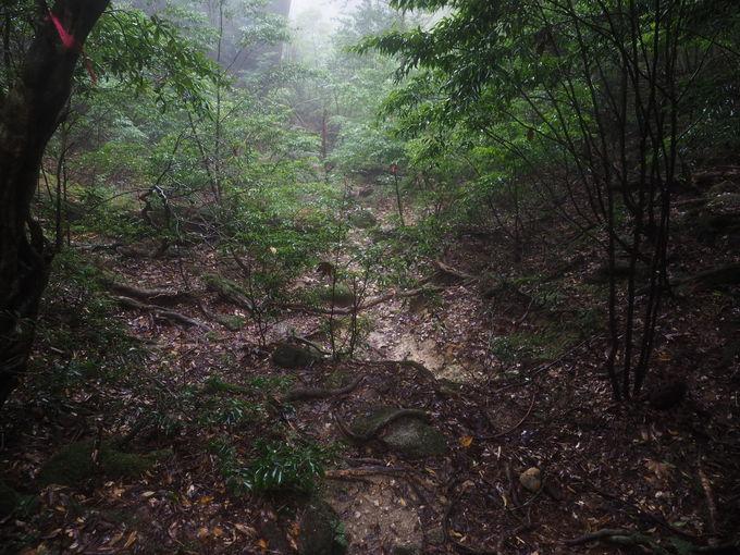 いざ、花之江河登山道を進む