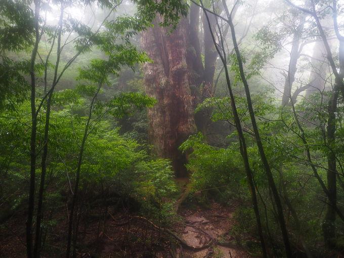 あふれる生命力を感じる大和杉