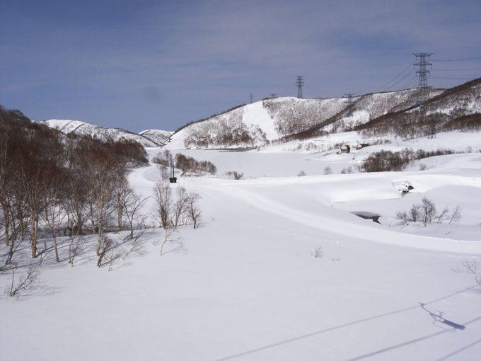 白樺の林道で乙女気分満喫♪かぐらスキー場田代エリア