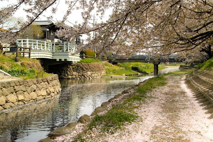 元荒川の桜並木は橋づくしの道