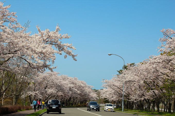 桜の道をスローなスピードで巡ってみよう!