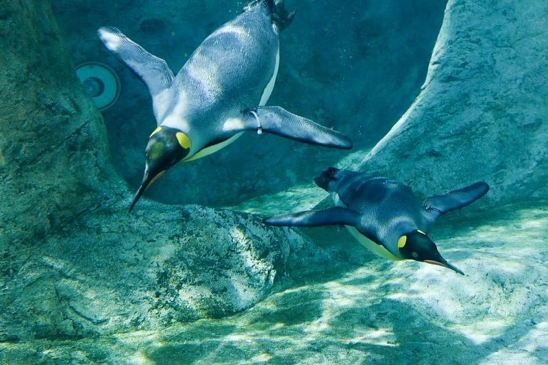 空飛ぶペンギンも必見!