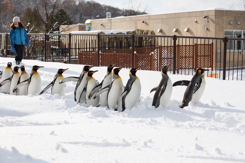 ペンギン館が見えると早足に!