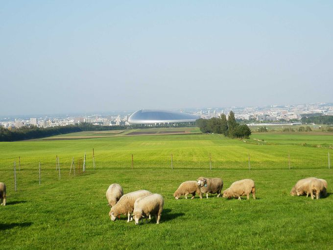 クラーク像が有名すぎる「羊ヶ丘展望台」ってこんなところ