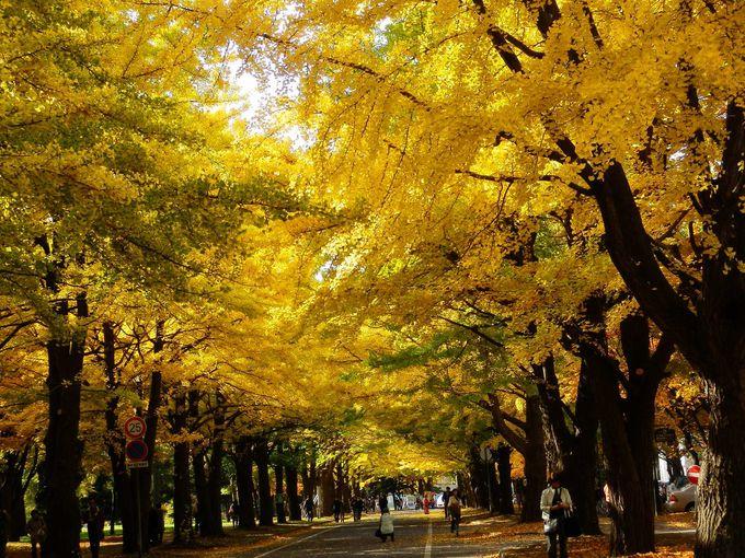 6.北海道大学