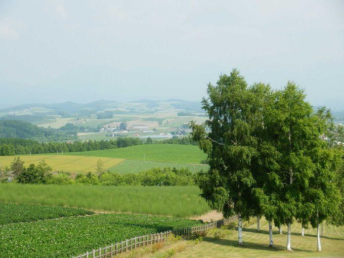 「パッチワークの丘」の景色は素晴らしい♪