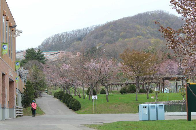 自然環境が良い「札幌円山動物園」