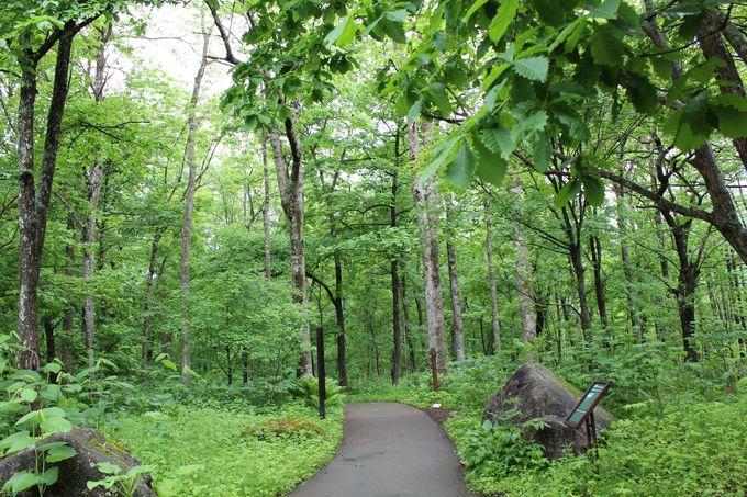 ここから始まる・深い森