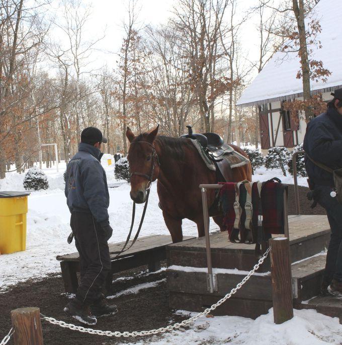 パークの人気アトラクション・観光「引き馬」