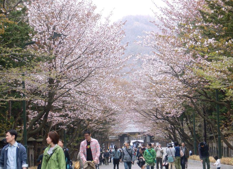 開拓の神様を祀るパワースポット!桜花咲く・北海道神宮