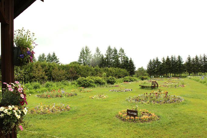 一年草、球根で描いた「パレット花壇」