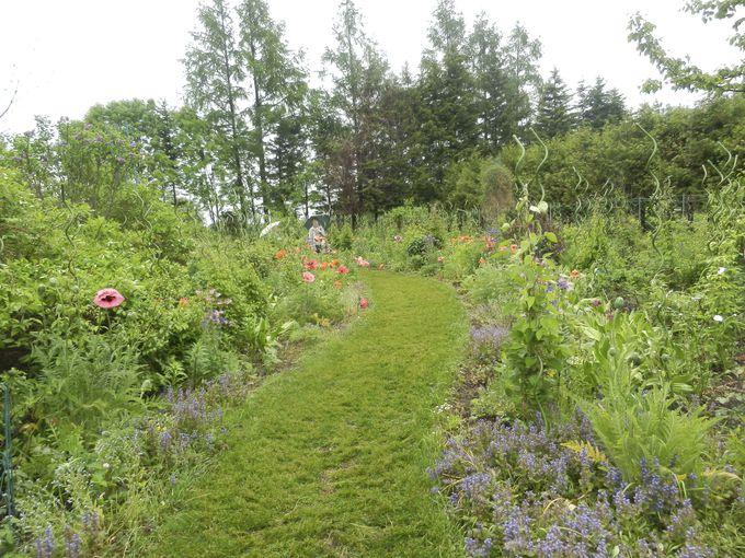 季節のお花が楽しめる「宿根ボーダーガーデン」