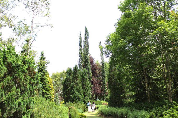 ヨーロッパガーデンで森林浴を満喫しよう!!