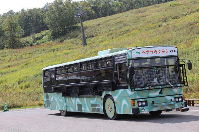 「ベアウオッチングバス」に乗って観察しよう♪
