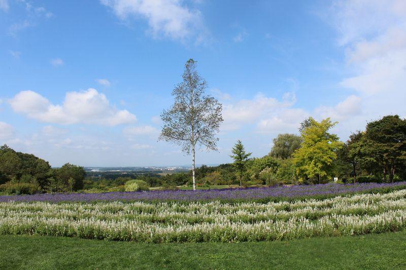 十勝平野を見渡す!花と食と農のテーマパーク「十勝ヒルズ」