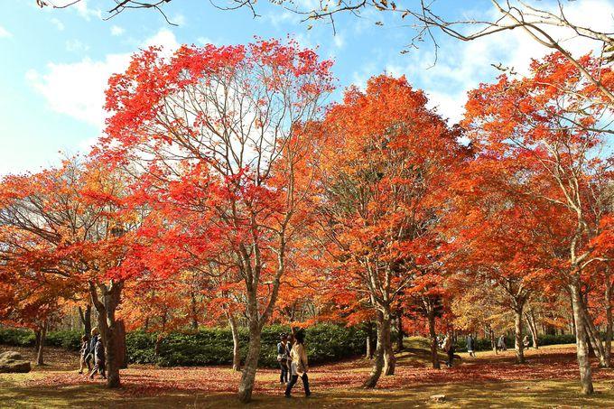 1000本の紅葉が美しい