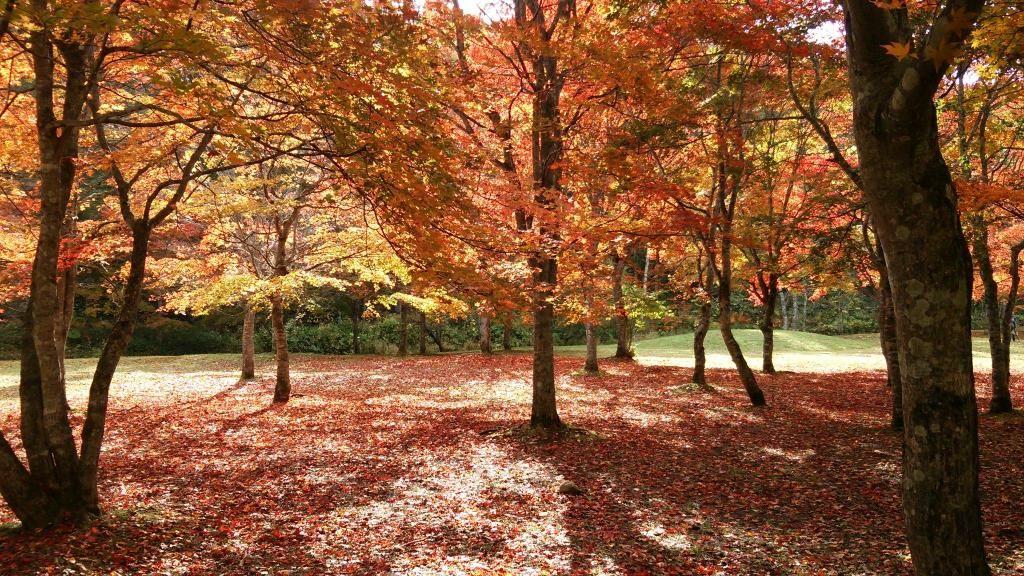 紅葉の絨毯が厚くなると冬仕度が始まります