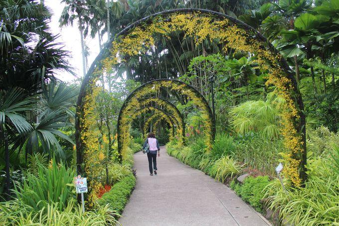 園内には6万本以上の蘭の花が!