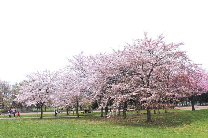 農林省北海道農事試験場跡地に造られた「札幌農試公園」