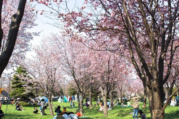 春のお花見を満喫しましょう!