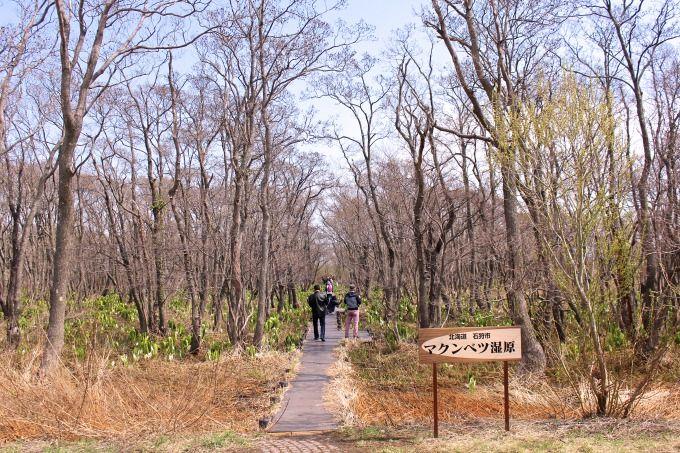 石狩川岸まで木道が続きます!