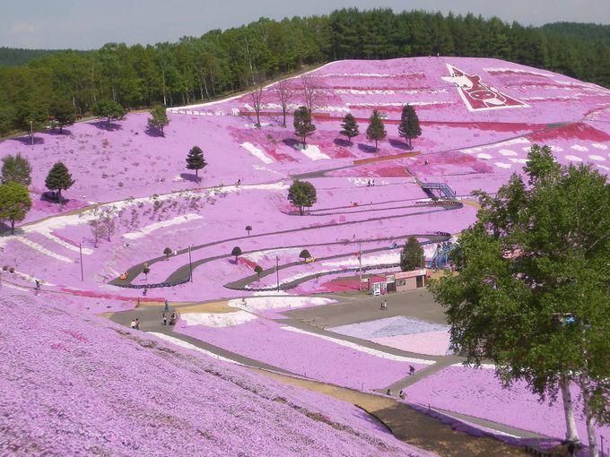 「ひがしもこと芝桜公園」の大パノラマが見所です