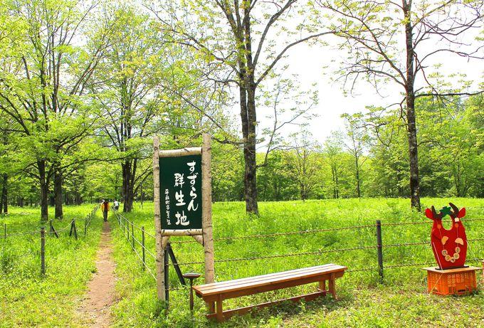 日本一の広さを誇る野生の「すずらん群生地」