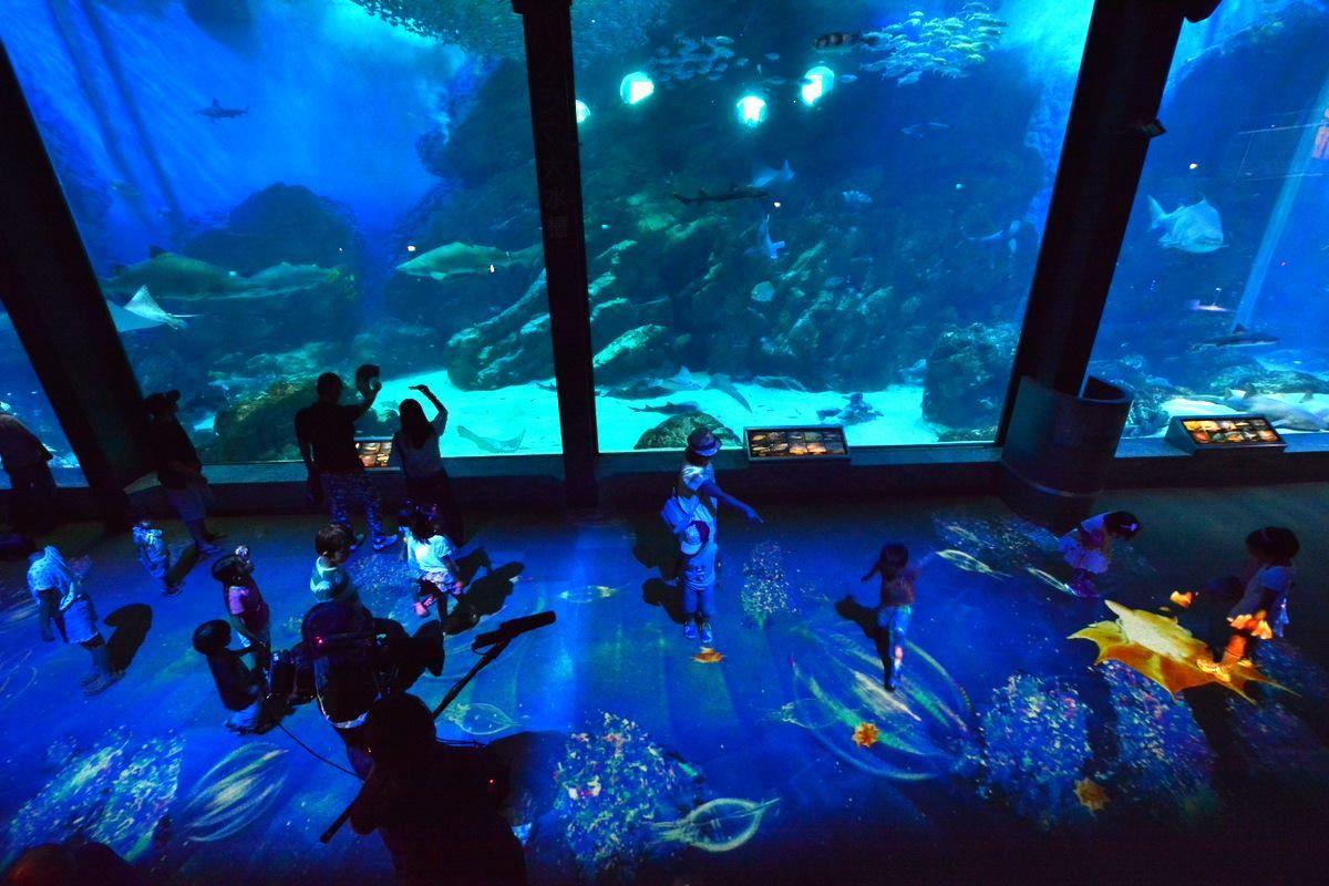 シーサイドマリンパークで「夜の水族館」を楽しもう!