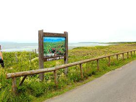 日本最大級の海岸草原!北海道北見市「ワッカ原生花園」