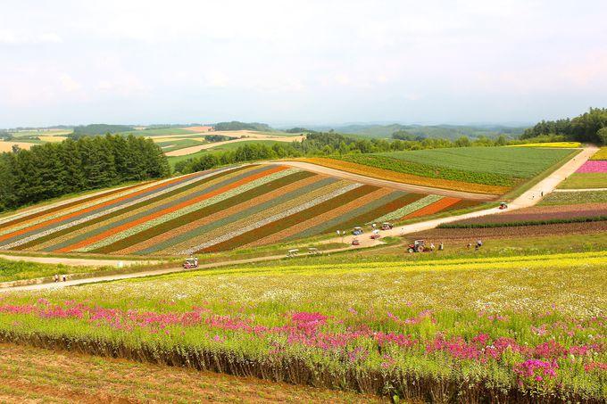 「展望花畑・四季彩の丘」も巡ってみましょう!
