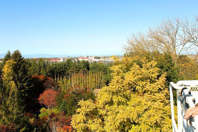 樹木の紅葉が美しい!