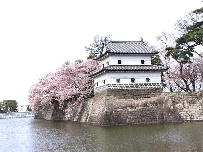 桜花咲く「旧二の丸隅櫓(すみやぐら)」