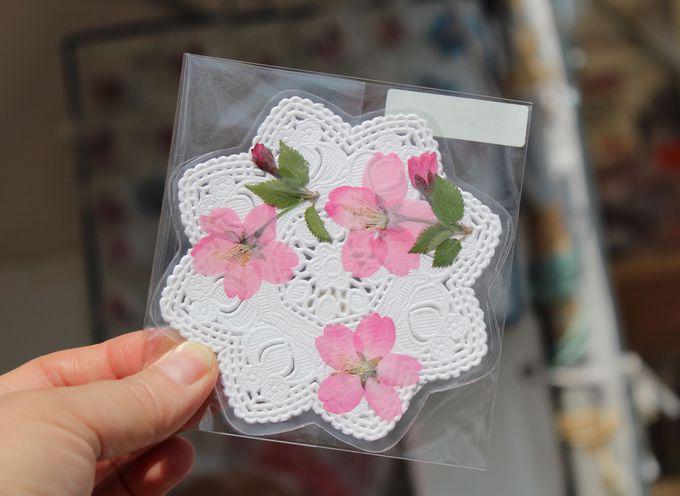 桜の開花に合わせて桜まつりが開催されます!