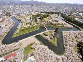 北海道一の桜の名所「函館五稜郭公園」とご当地グルメランチ4選