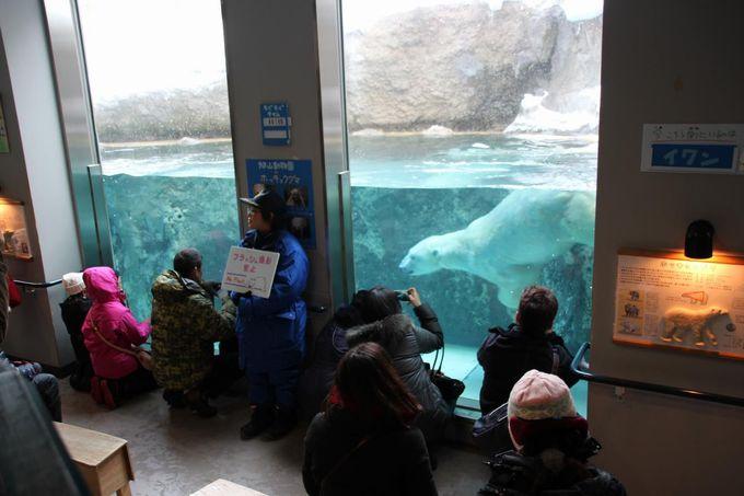 旭山動物園ならではの魅力!