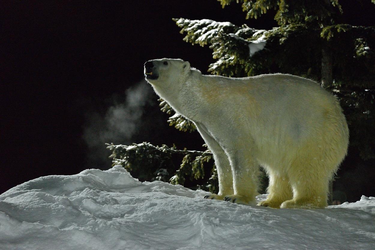 旭川冬まつりと同時開催「雪あかりの動物園」を楽しもう