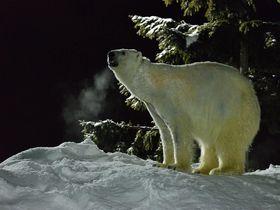 雪の中の動物達とインスタ映えする「雪あかりの旭山動物園」