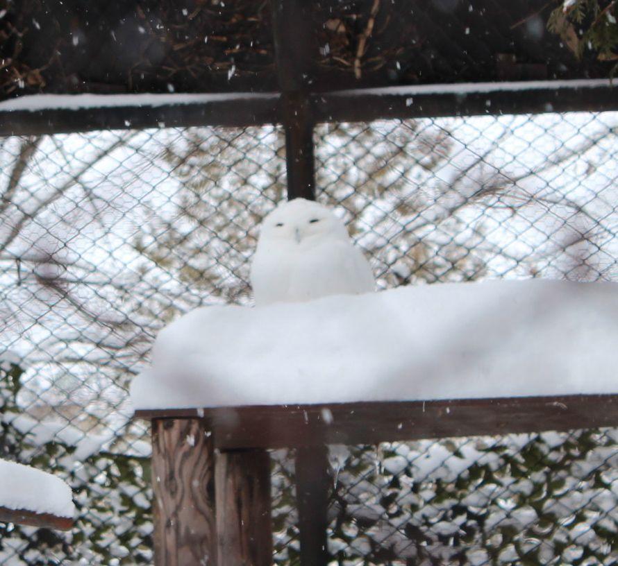 雪の中でも元気な動物達