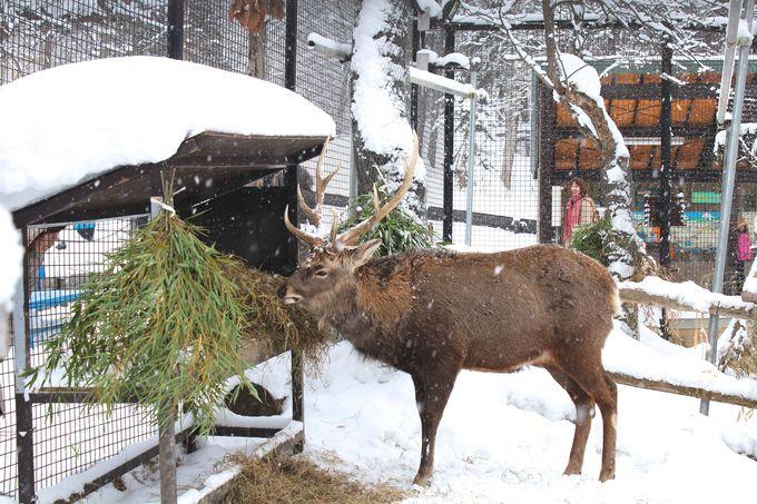 「エゾシカの森」と「北海道産動物舎」