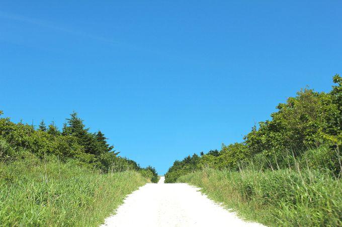 宗谷丘陵「白い道」でフットパス!