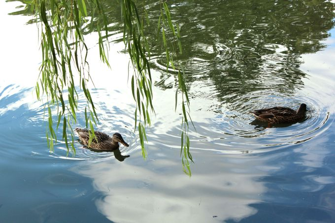 「中島公園」早朝の散策を楽しもう!