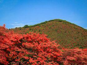 山裾を真紅に染めるつつじが美しい!初夏の函館「恵山つつじ公園」