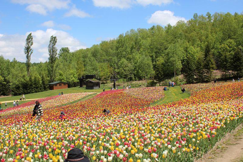 札幌「滝野すずらん丘陵公園」でチューリップ・すずらんフェスタ