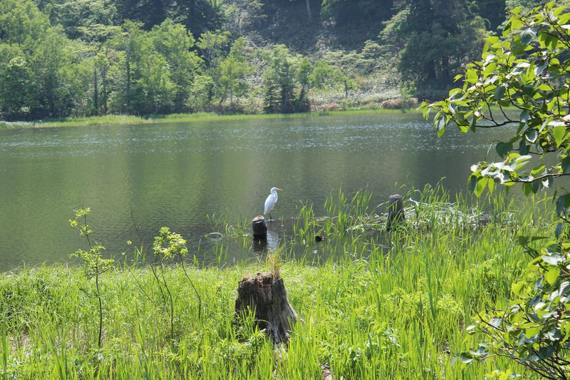 高山植物や野鳥との出会い
