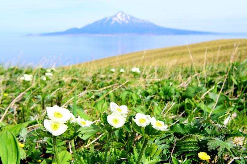 美しい高山植物が咲く!絶景の礼文島「桃岩展望台」をトレッキング