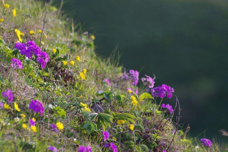 斜面に咲く美しい花