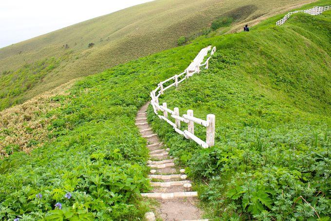 「桃岩展望台」へのトレッキングコース