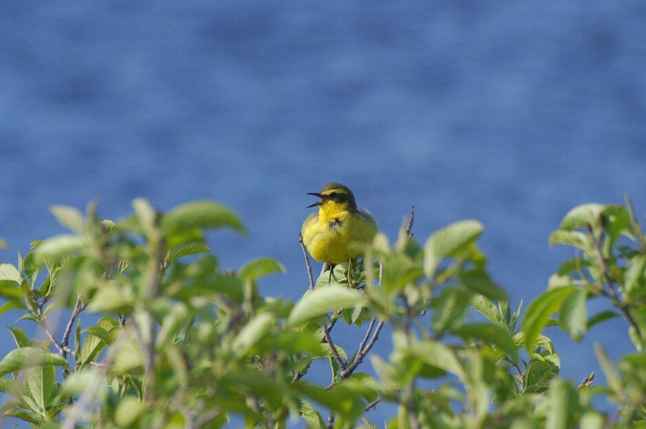高山植物や珍しい渡り鳥も!