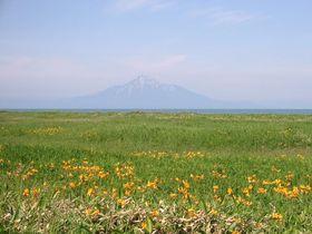 絶景湿原 北海道「サロベツ湿原」はエゾカンゾウが咲く時期がお勧め